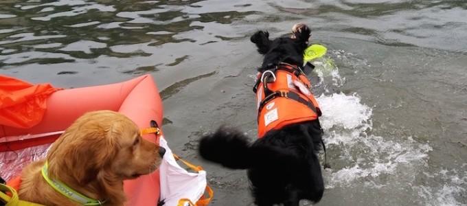 sicuro in mare - cani (1)