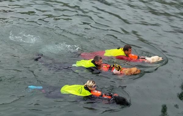 sicuro in mare - cani (2)