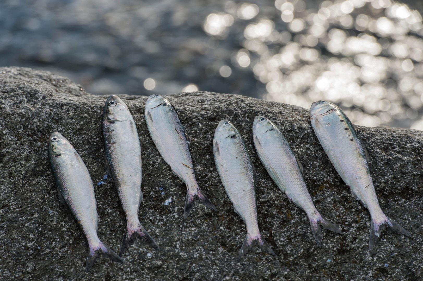 pesca agoni dervio 18.jpg