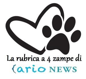 Logo rubrica Amici per la zampa