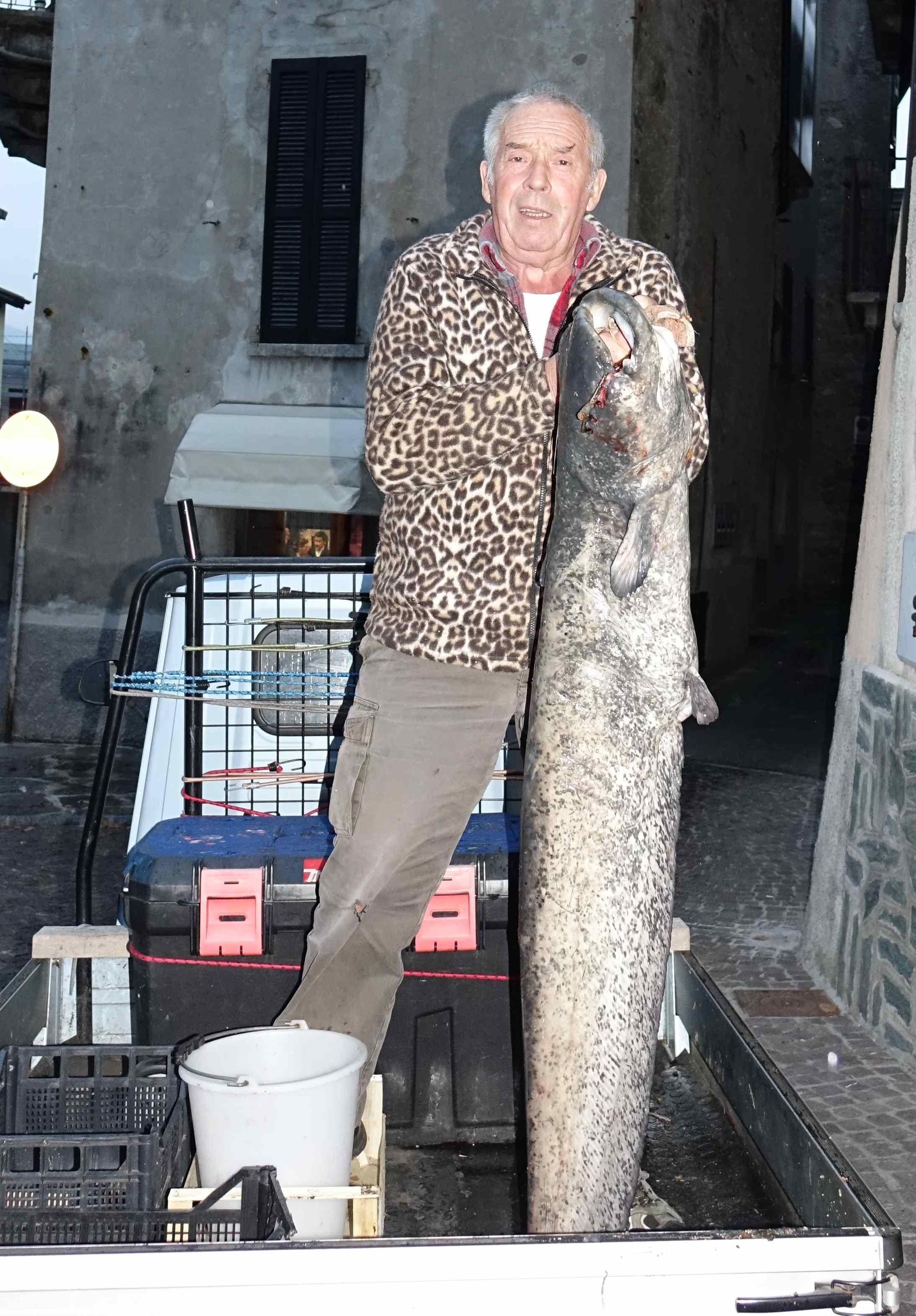 Mandello un altro pesce siluro nel lario all 39 amo dell 39 ex for Grosso pesce di lago